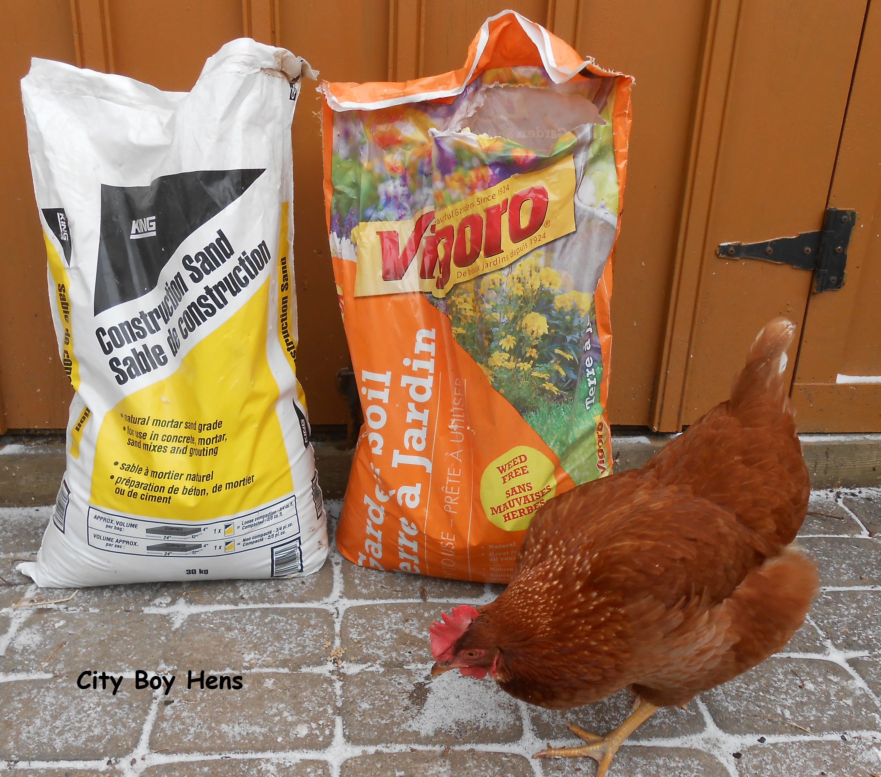 making a dust bath for your chickens city boy hens