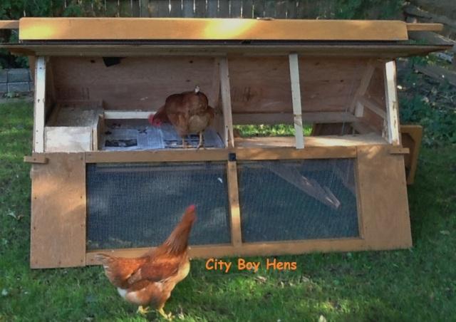 Portable chicken ark.