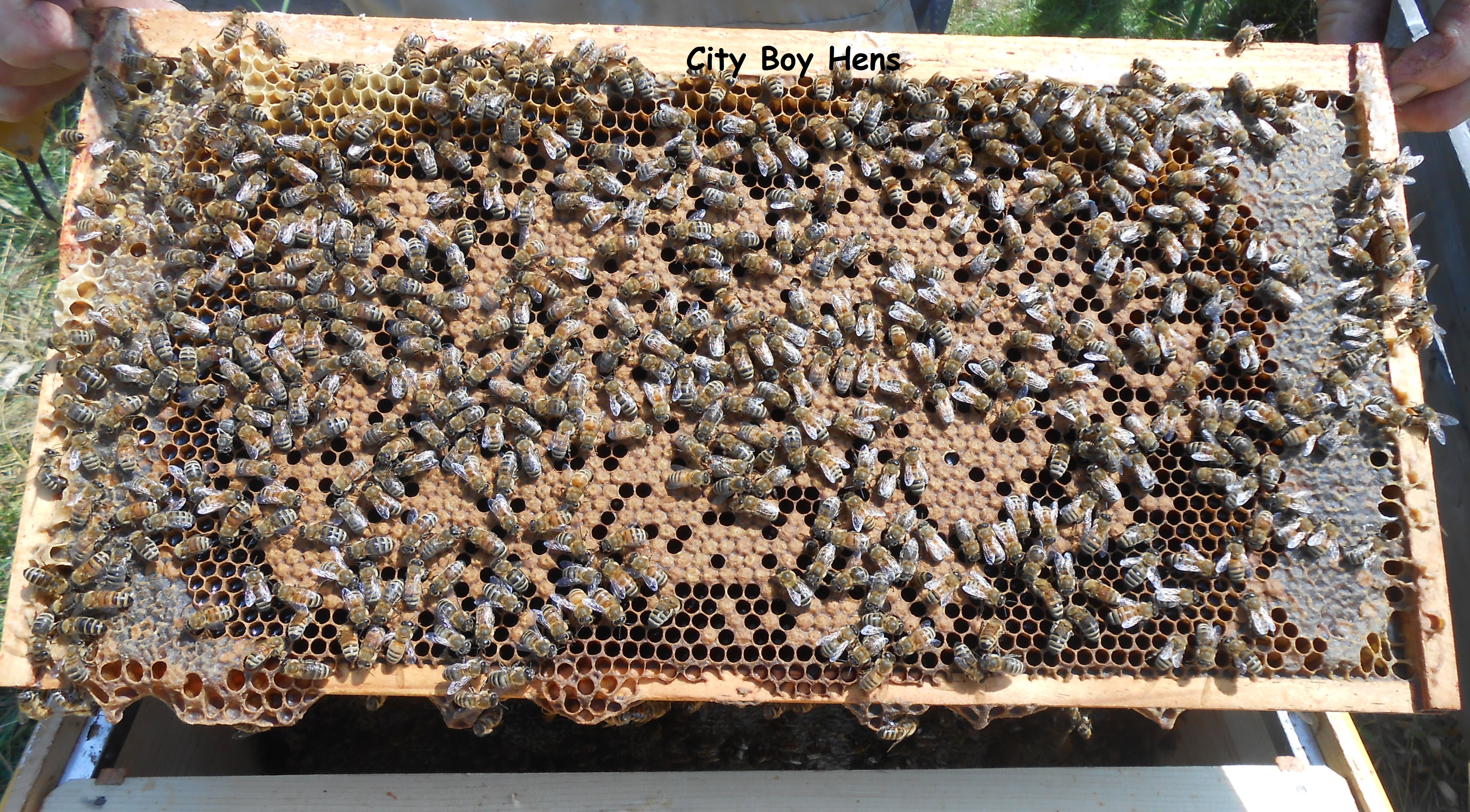 an introduction to bees and the making of their honey The round rock honey beekeeping course is an introduction to bees,  beekeeping, and honey production  our instructors all have significant  beekeeping backgrounds and will ensure that every student leaves our class with  the most.
